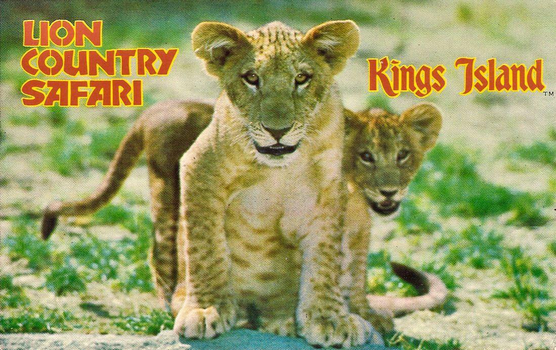 z lions