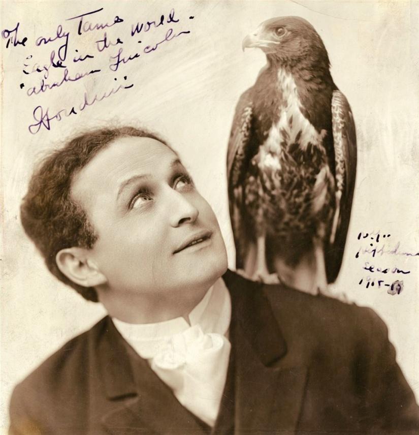 Houdini & bird